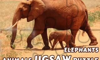 Animals Jigsaw Puzzle Elephants