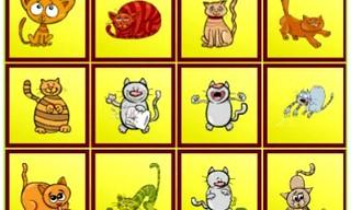 Cats Findiff