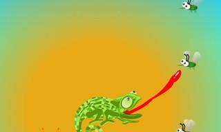 Chameleon Want Eat