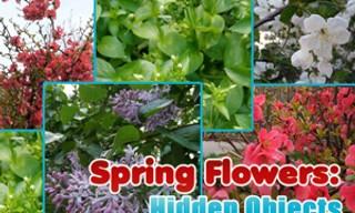 Spring Flowers: Hidden Objects