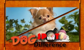 Dog Spot the Difference